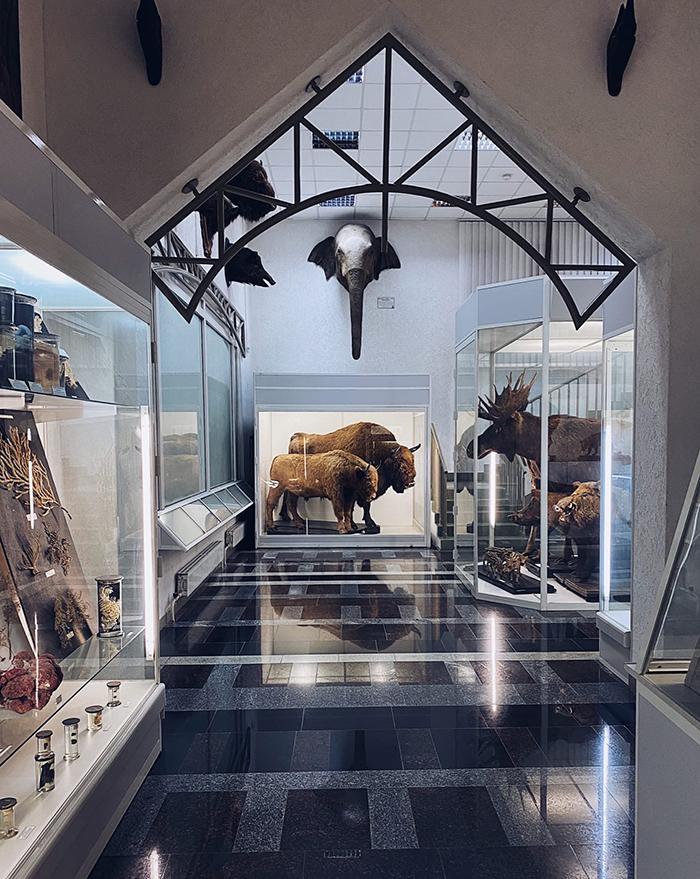 зоологический музей БГУ Минск