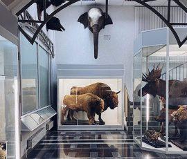 Зоологический музей БГУ